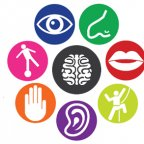 Sensory Processing Disorder Collection
